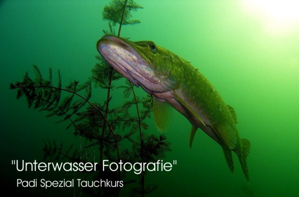 Unterwasser Fotografie Padi Spezial Taucher Kurs Tauchkurs Kurs
